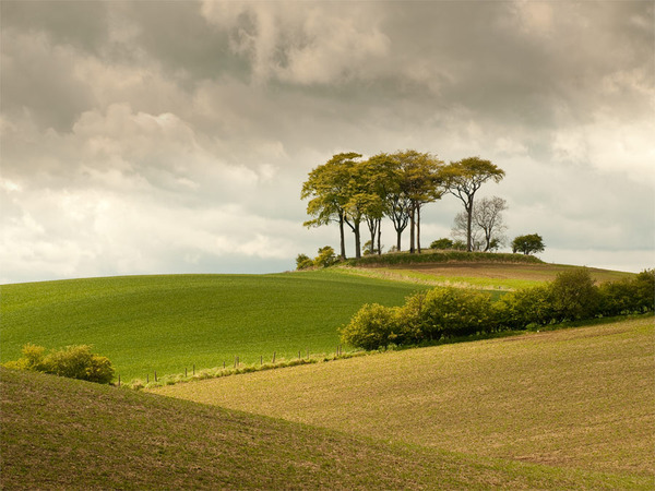 Gift voucher landscape photography courses workshops scotland for Garden trees scotland